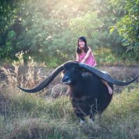 Woman riding water Buffalo