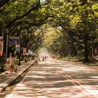 Street with trees and people in Manila, Philippines