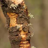 Bark on tree stem