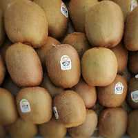 Kiwi Fruit for sale