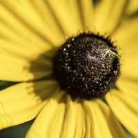Macro of yellow flower with detailed core