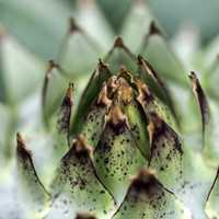 Spikey sharp plant core