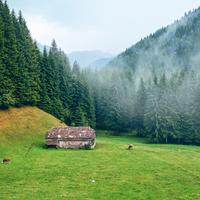 Mountain and Forest landscape in Romania