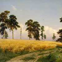 Rye Fields in Russia