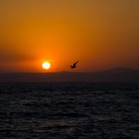 Sunset over the water with a bird flying in Vladivostok, Russia