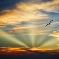 Bird flying in the sky with evening light