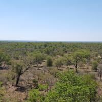 Landscape of Kruger National Park in South Africa