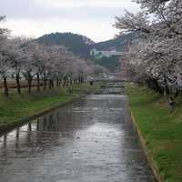 Mojeoncheon River and Trees in Mungyeong, South Korea