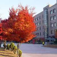 Sungkyunkwan University in Suwon, South Korea