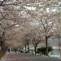 Yocheon River in spring in Namwon, South Korea