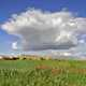 Large clouds over the flowery meadow