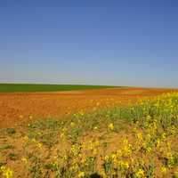 Yellow flowers landscape in Spain