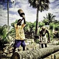 People Chopping Trees in Sri Lanka