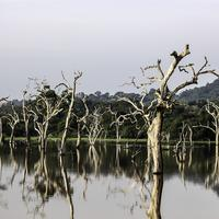 Trees in the lake landscape in Sri Lanka