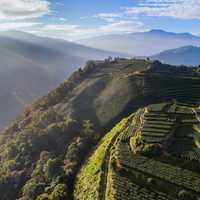 Tea Plantations on the side of the hill