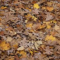Leafy Autumn forest floor