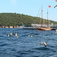 Marina of Burgazada, Istanbul with seagulls and boats
