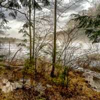 Brushy Lake Dam - Bankhead National Forest painting