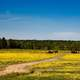 Farm Landscape with Yellow Flowers, Alabama