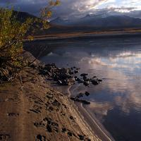 Bear Tracks along the lake at Gates of Arctic National Park, Alaska