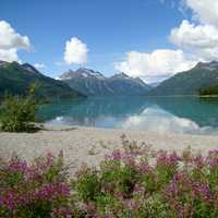 Fireweed on the beach near Crescent Lake landscape in Lake Clark National Park