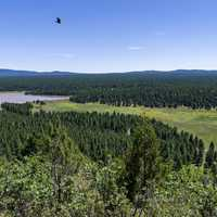 Arizona Trail: Anderson Mesa in Coconino National Forest