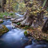 Steady rushing flowing water at Coconino National Forest