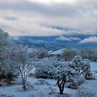 Oro Valley snowfall in 2011 in the Santa Catalina Mountains in Arizona