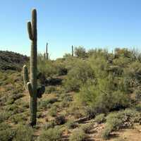 Sonoran Desert outside Wickenburg, Arizona