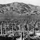Saguaro National Park East landscape in 1935