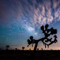 Landscape, night sky, and clouds at Joshua Tree National Park, California