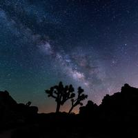 Night landscape, trees, and galaxy at Joshua Tree National Park, California