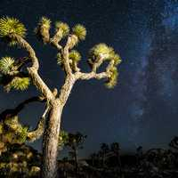 Stars and the Milky way at Joshua Tree National Park, California