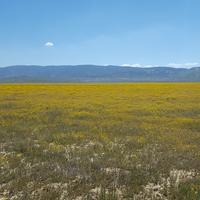 Carrizo Plain National Monument in California Landscape