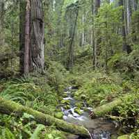 Headwaters Forest Reserve in the forest