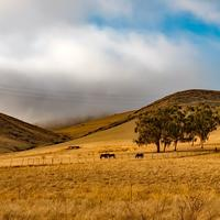 Landscape of farms with livestock under clouds in California