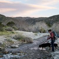 Man and Dog Crossing Stream on the Pacific Crest Trail