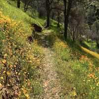 Mountain Hiking trail with flowers