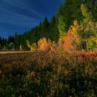 Night time Landscape in the Siskiyou National Forest