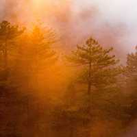 Orange Sunlight, Mist, and Fog in the Forest at Big Sur, California