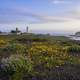 Piedras Blancas Outstanding Natural Area Seaside Landscape