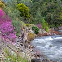 Rushing Stream in the spring with flowers on the shoreline