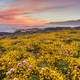 Shoreline Landscape with yellow flowers with dusk sky in California