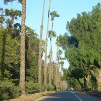 Victoria Avenue Lined by trees in Riverside, California