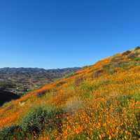 Wildflowers on the hillside