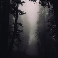 Trees and Fog in Sequoia National Park, California