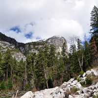Yosemite Valley landscape with trees