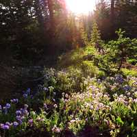 Sunlight shining through the trees and flowers