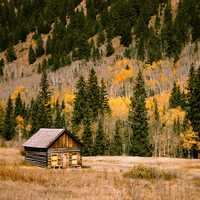 Cabin and woods in the fall in Boulder, Colorado
