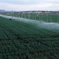Center-pivot irrigation of wheat growing in Yuma County, Colorado